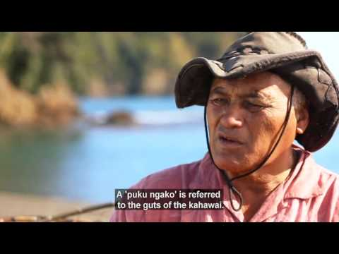 Traditional Maori methods of fishing