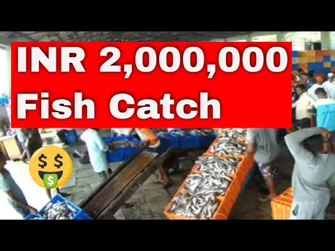 INR 2,000,000 Sale Of FIsh @ Sassoon Docks, Mumbai