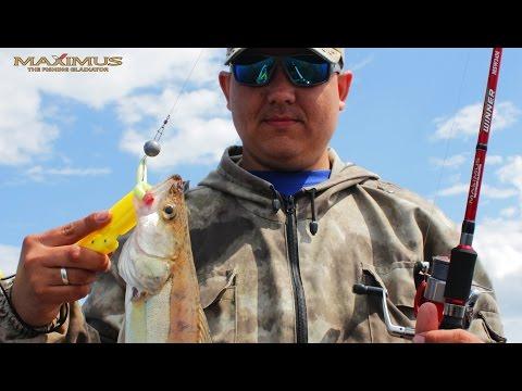 БЮДЖЕТНЫЙ СПИННИНГ! MAXIMUS Archer и Winner.  Kamfish