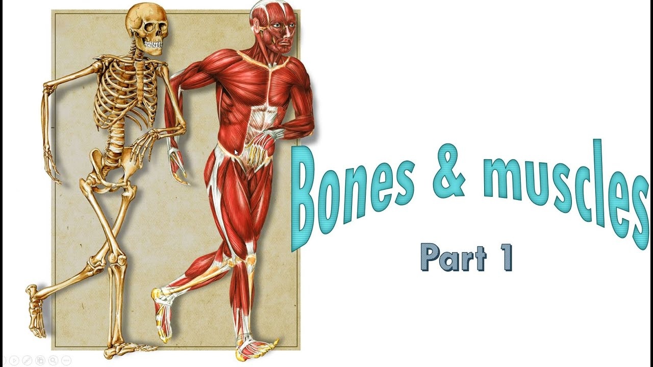 Bones And Muscles Part 1 5th Standard Science Cbse Youtube