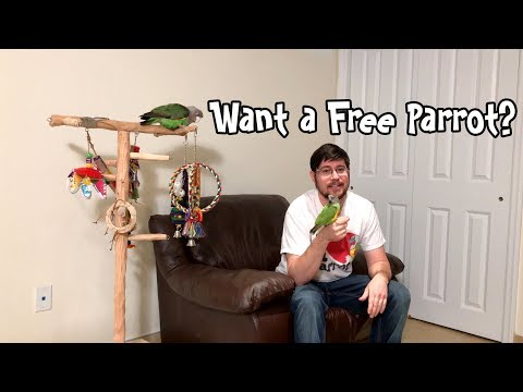 Want A Free Parrot?