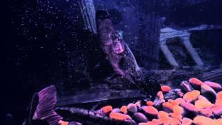 gator gar florida gar rtc hybrid jag wolf fish
