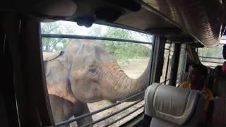 Inside Ridiyagama safari park