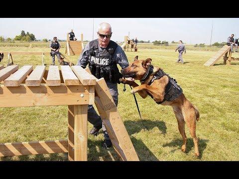 Pooches on patrol in Peel Region