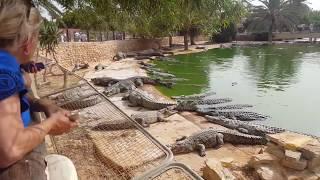 farma krokodyli na Djerbie Zobacz Ciekawe