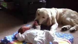 Дети и собаки. Смотрите, как они любят друг друга!