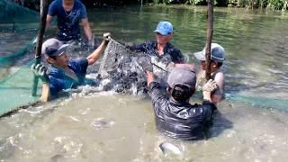 0281 Dẫn bạn hâm mộ kênh Youtube xem mấy cậu kéo lưới bắt cá -  Fishing by the net in Vietnam