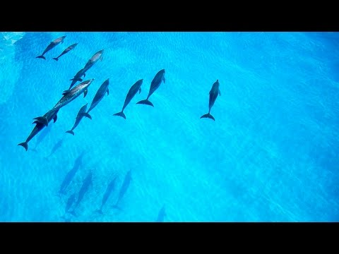 Dolphin Tales 3/2016 - Sweet Sensation with Wild Dolphins in the Bahamas