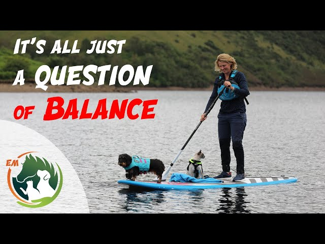 Balance - 2 Donkeys 2 Ponies 1 Cat 1 Dog & a SUP board!