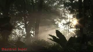 Gambar cover Suara Kicauan Nightingale di Alam Cocok untuk Master Burung Kicauan