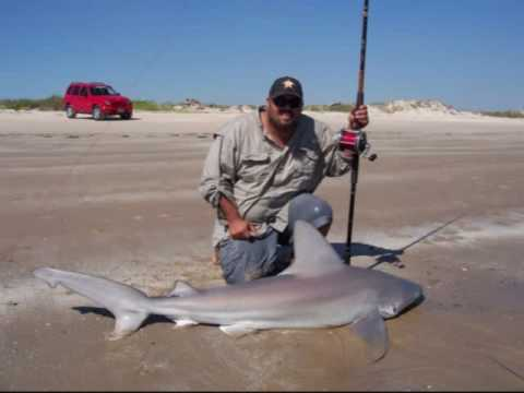 Texas shark fishing sandbar shark youtube for Shark fishing gear for beach