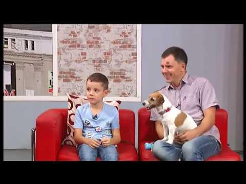 коктейль красный пёс