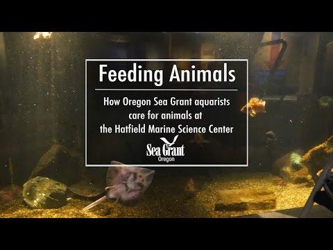 Feeding Animals at the Hatfield Marine Science Center's Visitor Center