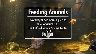 Feeding Animals at the Hatfield Marine Science Center's Visitor Center