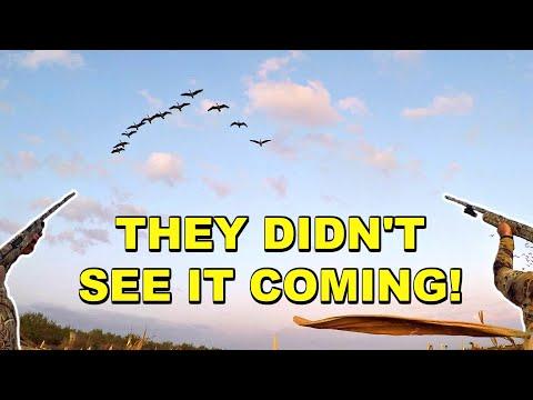 INSANE Early Goose Hunt In CALIFORNIA!