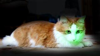 Кот Персей и лазер