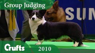 Cardigan Welsh Corgi wins Pastoral Group Judging at Crufts 2010 | Crufts Dog Show