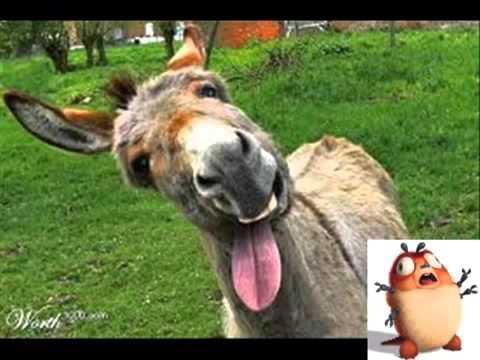Resultado de imagem para burro engraçado