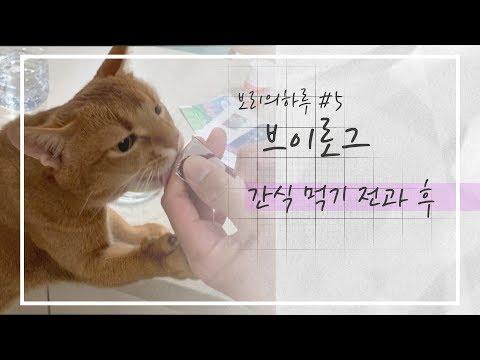VLOG | 고양이가 간식먹기 전과 후(화장실 들어갈 ㄸ...) | 보리네 브이로그 5화 |