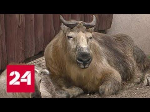 """Москвичей зовут на """"Бодрое утро"""" в зоопарк - Россия 24"""