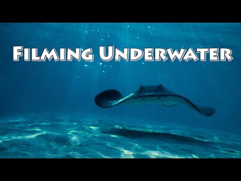 How to film Underwater with DSLR and Red cameras!