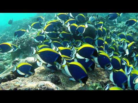 Dhigurah Maldives diving