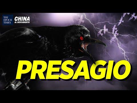 Miles de cuervos aparecen en China; Exclusivo: Hacker chino revela espionaje | China al Descubierto