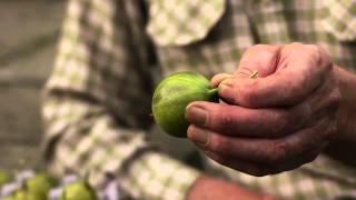 The Forgotten Fruit (short film by Deadpan Films)