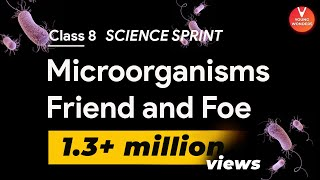 Microorganisms Friend and Foe | Class 8 Science Sprint for Final Exams | Class 8 Science Chapter 2
