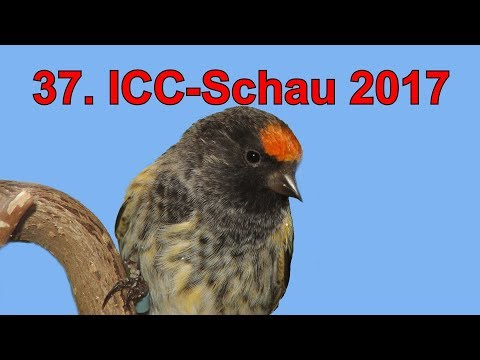 37. ICC SCHAU 2017 des Internationalen Cardueliden Club e.V.