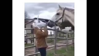 Atın hayelleri yıkıldı