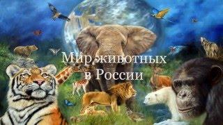 Мир животных в россии-часть 1
