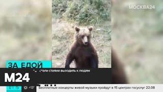 Актуальные новости России и мира за 20 августа - Москва 24