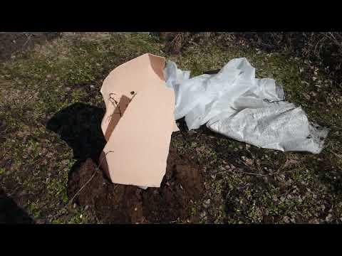 видео: Вскрытие покажет