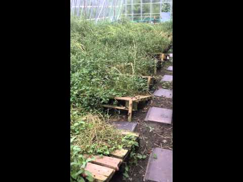 EscargotsNI - On snails farm