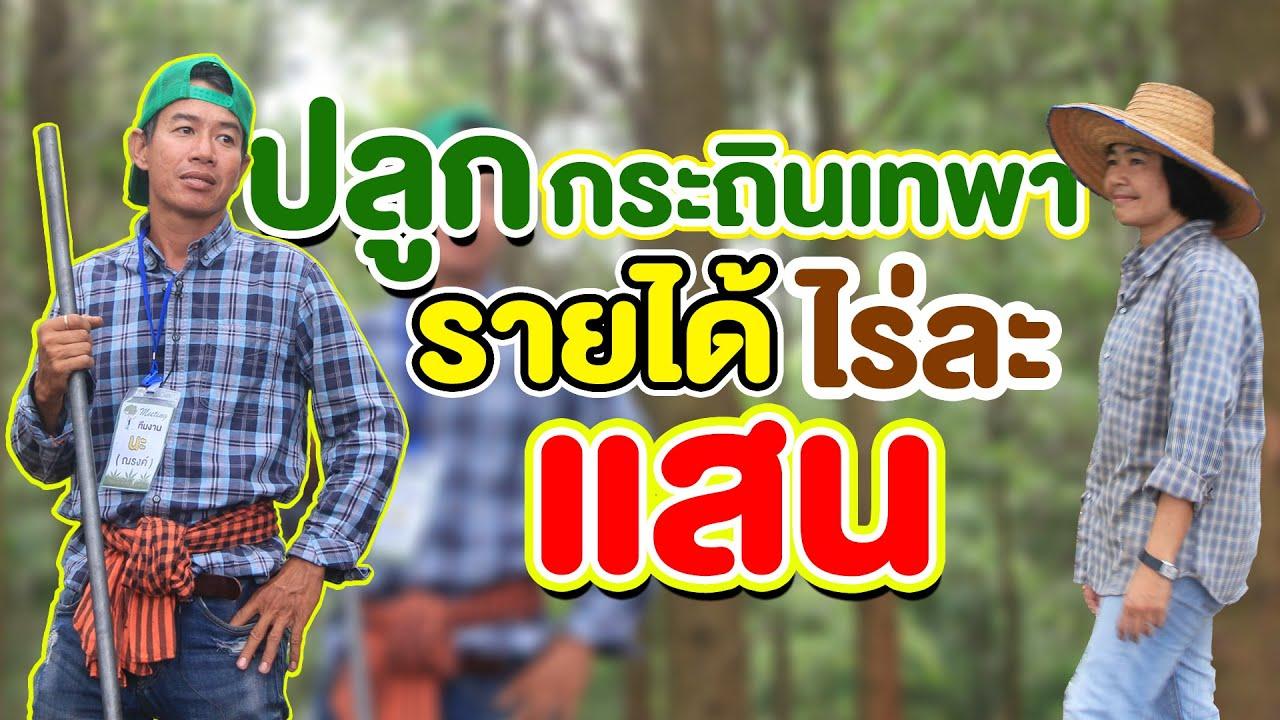 กระถินเทพา ใบกวาดทำดินใบไม้ สร้างรายได้ เป็นแสนต่อไร่!!! | คนรักษ์ป่า ep 127