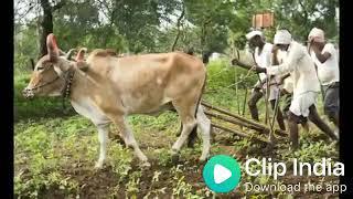 भारत एक कृषि प्रधान देश होते हुए भी किसानों की यह दशा है