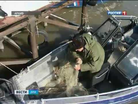 Браконьеры в Ростовской области выловили 200 раков