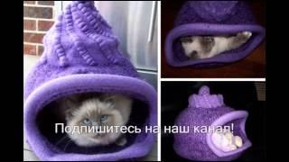 Домик когтеточка для любимой кошки