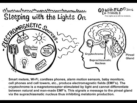 EMF and poor sleep quality, the mechanism explained