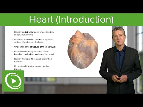 Heart (Introduction)  – Histology | Medical Education Videos