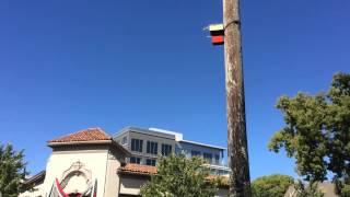 Mysterious Birdhouse Art In Sacramento