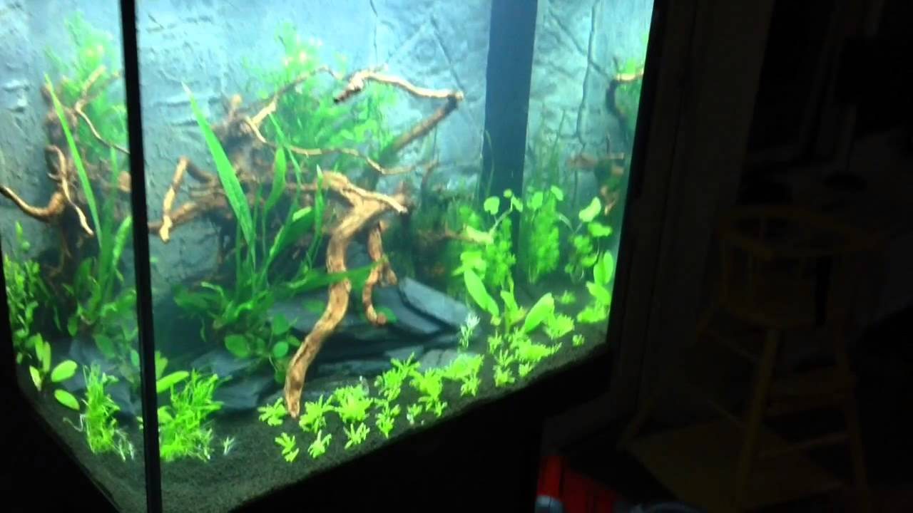 Juwel Lido 200 Planted Tank The Beginning Youtube