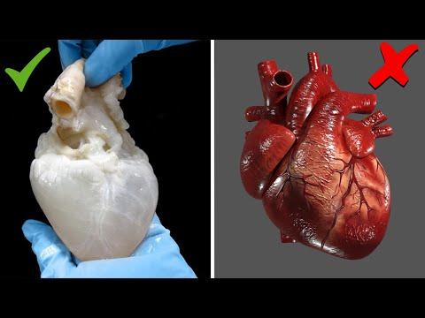 قلب الانسان ..7 أشياء ستراها لأول مرة في حياتك
