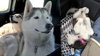 Kira Stole Memphis's Seat and Tornado Watch | Travel Vlog