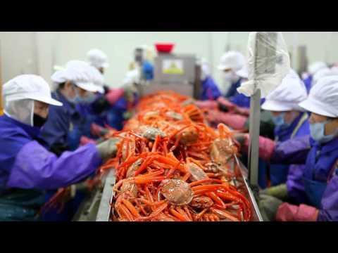 Seafood Company SUNGJIN TRADING CO., LTD.