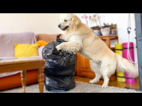 Hiding from a Golden Retriever in a Trash Bag