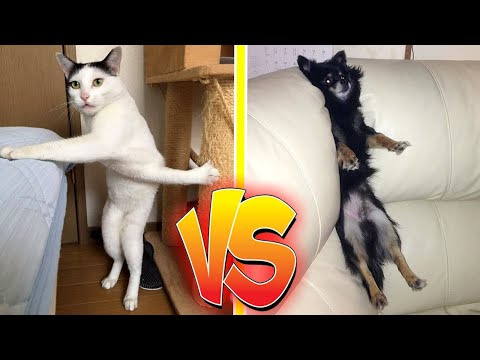 😂😂 FUNNIEST PET COMPETITION 😂😂 [CATS vs DOGS]