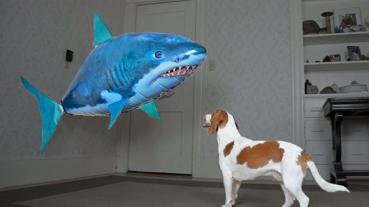 dog-saves-little-brother-from-shark-funny-dogs-maymo-potpie