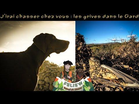 J'irai chasser chez vous : chasse aux grives perdu dans le Gard